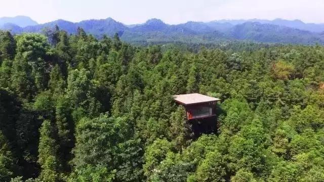 森林里的树屋世界:齐云山自由家营地