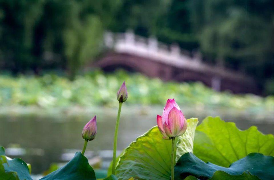 夏初雨后风景图片