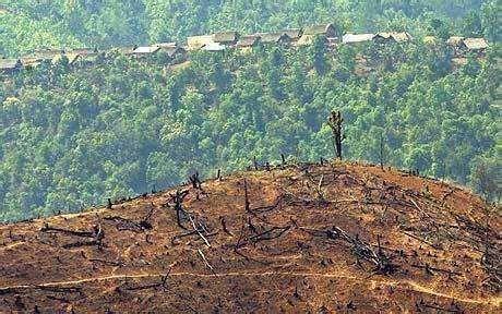 曾经占世界雨林面积一半的亚马逊,如今伤痕累