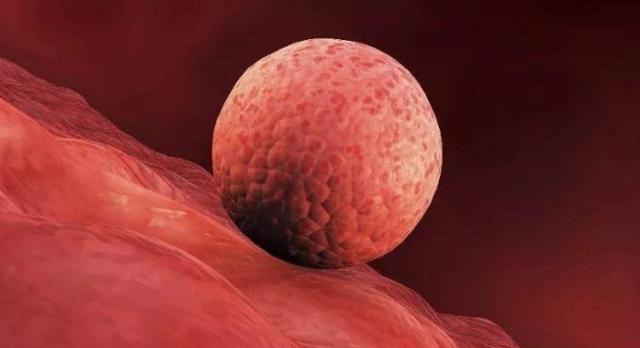 备孕时,别等停经了,受精卵成功着床后,身体会先发出这3个信号