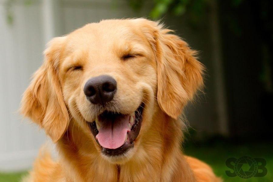 动物笑脸升级版,谁说冷血动物不会笑
