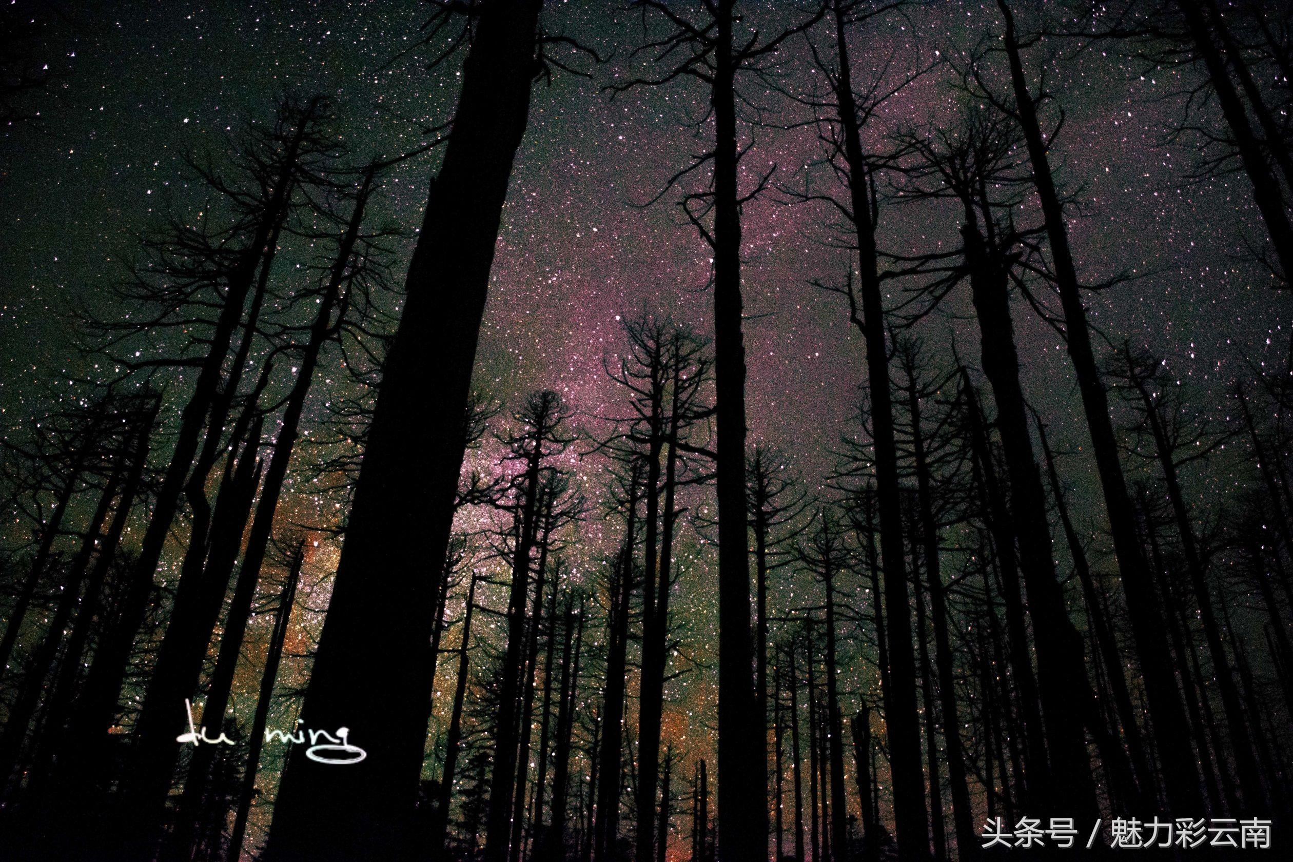 魔幻森林,香格里拉千湖山的星空,这里的夜晚似乎可以摘星辰图片