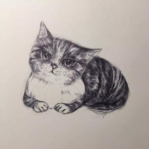 3分钟,教你学画一只绅士猫