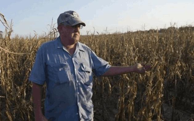 中美贸易战坑苦美国豆农,大豆价格跌至10年最