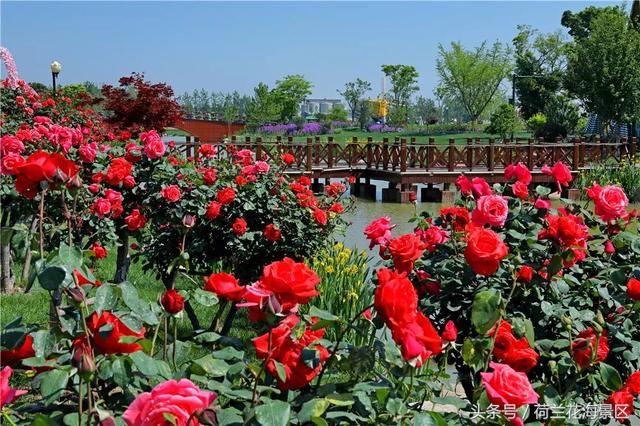 我们可以坐在玫瑰花树下的长椅上