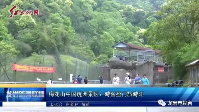 梅花山中国虎园景区:游客盈门旅游旺