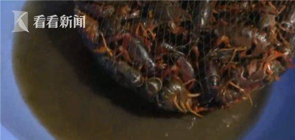 又快又干净?不法商贩竟用洁厕液洗龙虾!或影响人体免疫系统