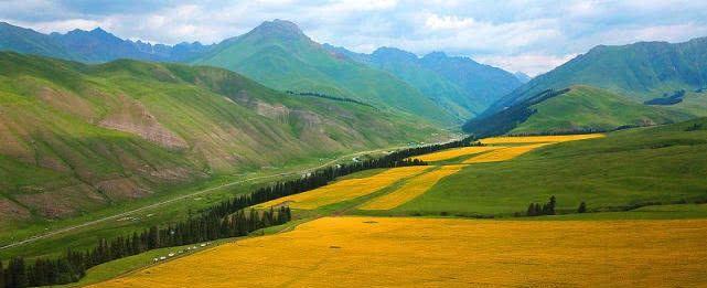 新疆巴州:和静县巩乃斯沟油菜花成风景