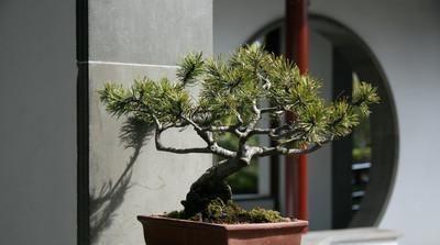 中秋前,此树要种一棵,养人又养钱,一年兴旺福气自然来
