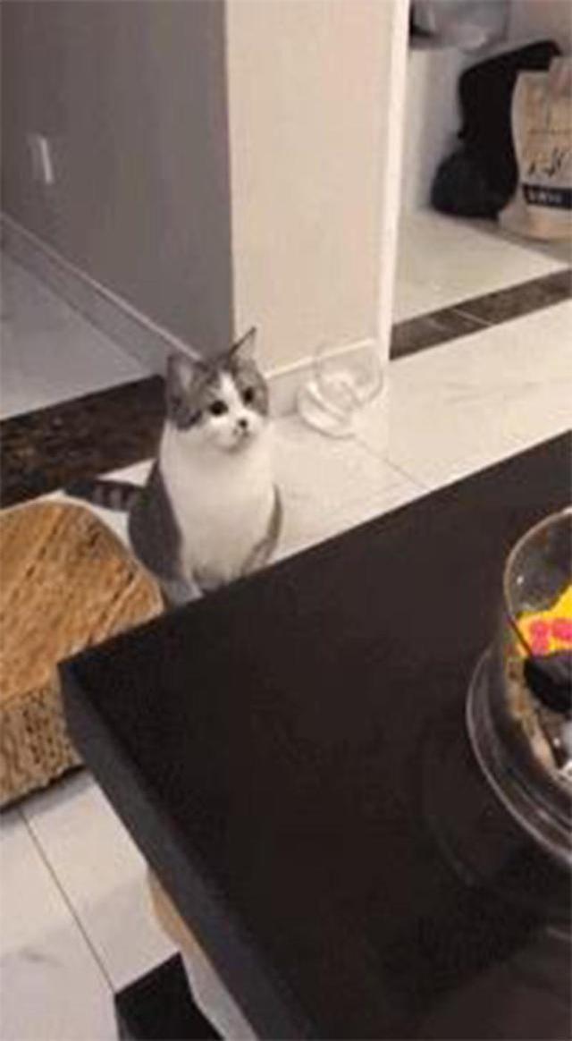 主人露出猫咪在发现自己,接下来漏气的表情,笑偷拍女生图片