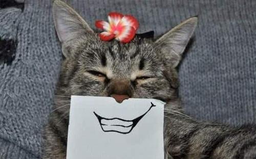 猫咪,被铲屎官一阵乱收获,意外折腾图开下表情包空调管理员一组超级软图片