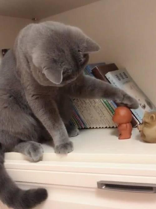 一妹子就在家里养了一只可爱的蓝猫,平时猫咪特别喜欢跳到高处默默趴