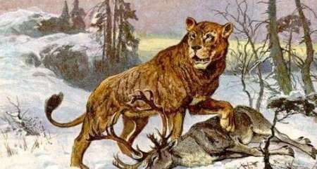 8种最美丽的灭绝动物,今天的我们只能悲伤的看图片!