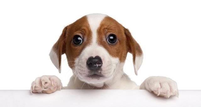 _适合女宝宝名字的字2018年狗年如何给本人的宝宝取一个很暖心又好听的小名呢