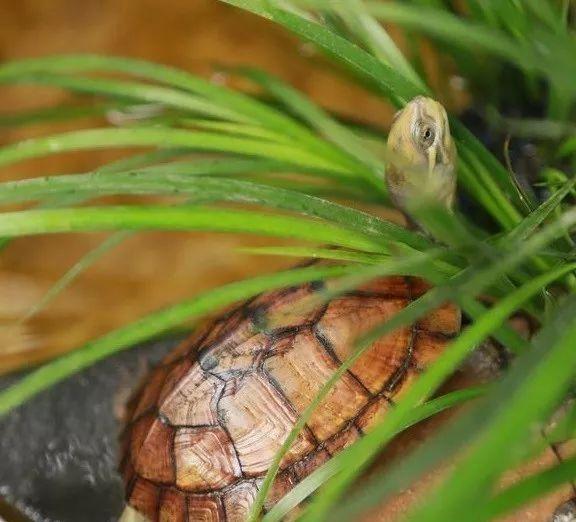 """所谓的""""仿生态龟缸"""",你又是怎样理解的呢?"""