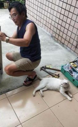 七年前怒斥女儿干嘛养猫,现在为它做别墅,还说自己是最爱猫的